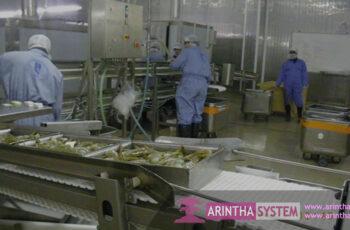Shrimp Processing Equipment